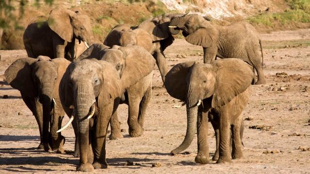 Heather Wall River Crossing Samburu Park Kenya copy 1