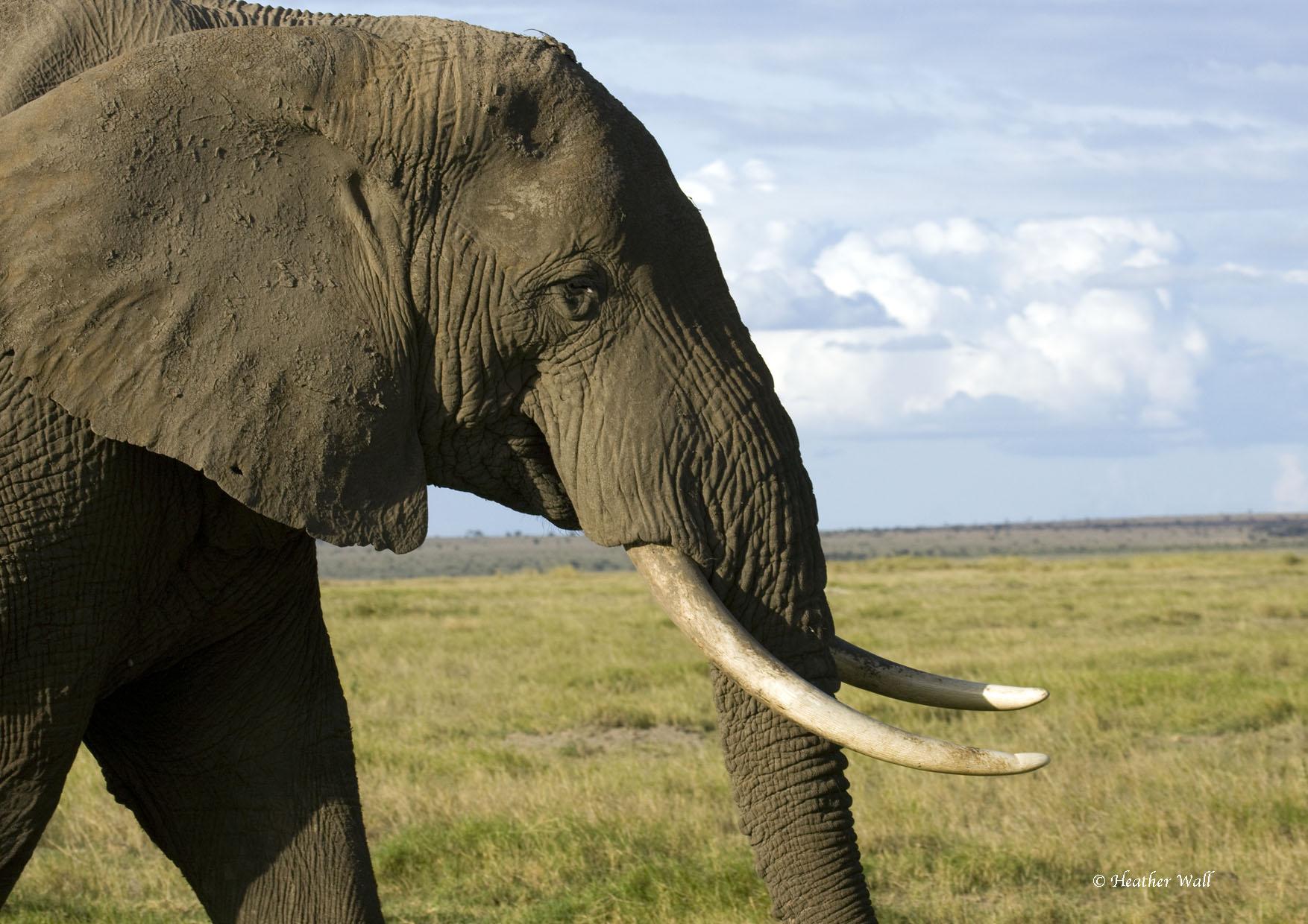 Primary Lessons | Elephanatics